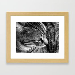 Black and White Tabby Cat Framed Art Print