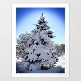 Pine Tree in Snow - 2011 Art Print