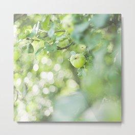 The apple tree Metal Print