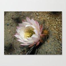 Cactu Flower Canvas Print
