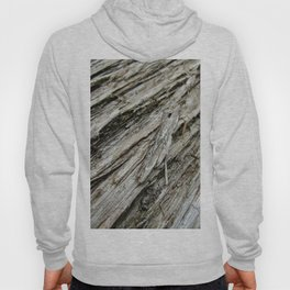Bark on a Downed Tree Hoody