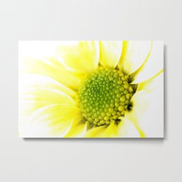 Yellow Daisy Macro Nature Photography Metal Print