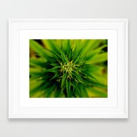 marijuana Framed Art Prints featuring Marijuana by TilenHrovatic