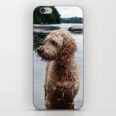 Dog in a lake iPhone & iPod Skin