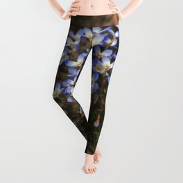 Wild Flowers Bluets Leggings