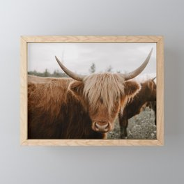 Highland Cattle 1987 Framed Mini Art Print