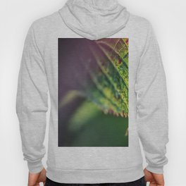 An accent tone Hoody