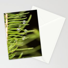 Spruce branch with drops Stationery Cards