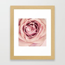 My Heart is Safe with You, My Friend - pale pink rose macro Framed Art Print