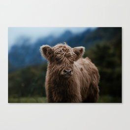 Baby Highland Cow Canvas Print