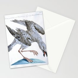 054 larus maculis5 Stationery Cards