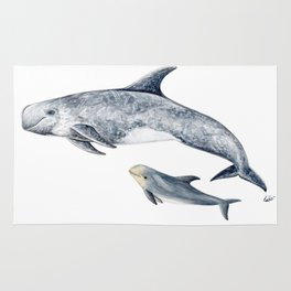Risso´s Dolphin Rug
