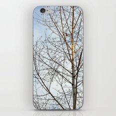 Birch Tree 9781 iPhone & iPod Skin