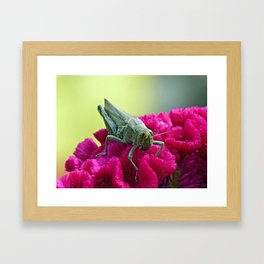 Grasshopper on Cockscomb Framed Art Print