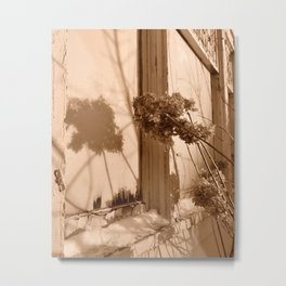 Winter Hydrangeas  Metal Print
