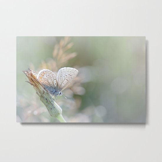 Sunbathing butterfly... (blue version) Metal Print