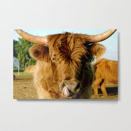 Scottish Highland Metal Print