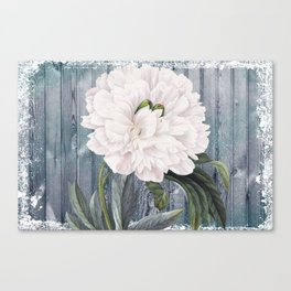 White Peony On Winter Grey Fence Canvas Print