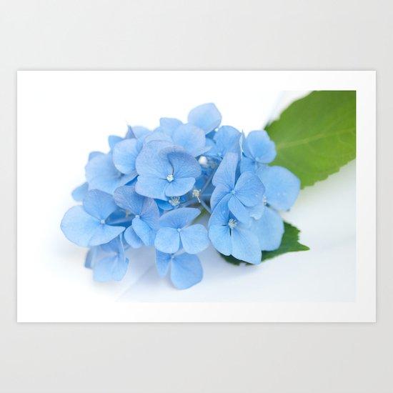 Blue Hydrangeas #1 #decor #art #society6 Art Print