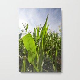 green corn Metal Print
