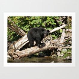 The Fisherman- Black Bear and Stream Art Print