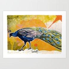 Pavone Art Print