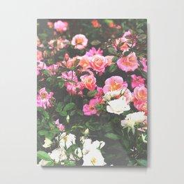 Sorbet Rose Garden Metal Print