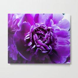 purple flow Metal Print