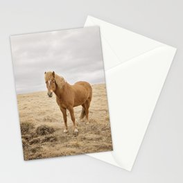 Solitary Horse in Color Stationery Cards