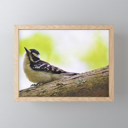 This Bird is TOO Sweet! by Reay of Light Photography Framed Mini Art Print