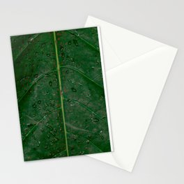 Botanical leaf with rain drops | Tropical travel photography | Nature art print Stationery Cards