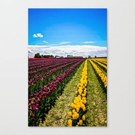 Tulips in La Conner, Washington Canvas Print
