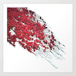 Nature climbing Red Art Print