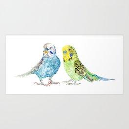 Parakeets - Budgie Art Print