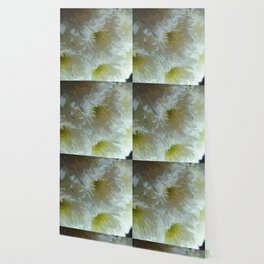 White Chrysanthemum Flower Bouquet 2 Wallpaper