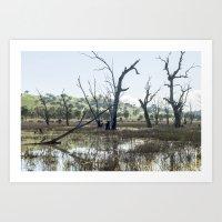 Boggy Bridge Swamp Art Print