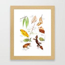 Animals that look like Leaves Framed Art Print