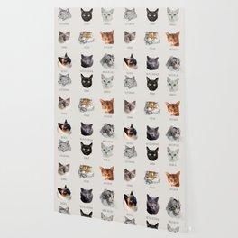 snouts of cats Wallpaper