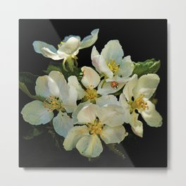 Apple blossoms and a Ladybug Metal Print