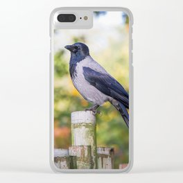 Hooded Crow Clear iPhone Case