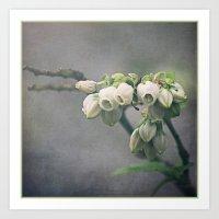 Blueberry Blossoms Art Print