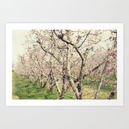Peach Trees Art Print