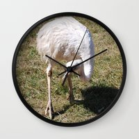 ostrich Wall Clocks featuring Ostrich by Sarah Shanely Photography