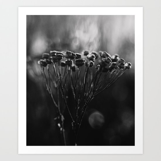 cold still life Art Print