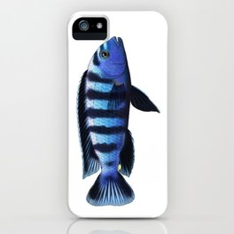 Malawi cichlids Chindongo saulosi male iPhone Case