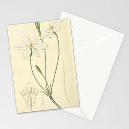 Flower 1555 milla biflora Snow white Milla17 Stationery Cards