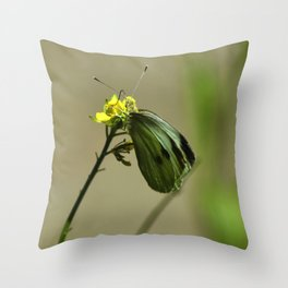 Green Winged Fairy Butterfly Throw Pillow