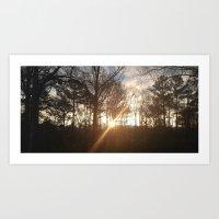 Morning Through The Trees Art Print