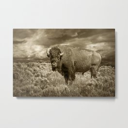 American Buffalo in Sepia Tone Metal Print