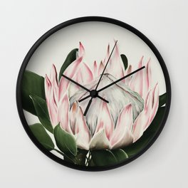 Protea Flower in Beautiful Shades of Pink and Green Wall Clock